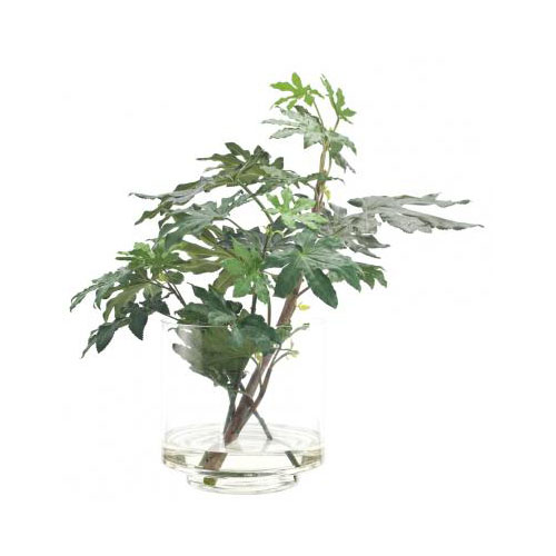 NDI  Fatsia Cutting, Glass Cylinder