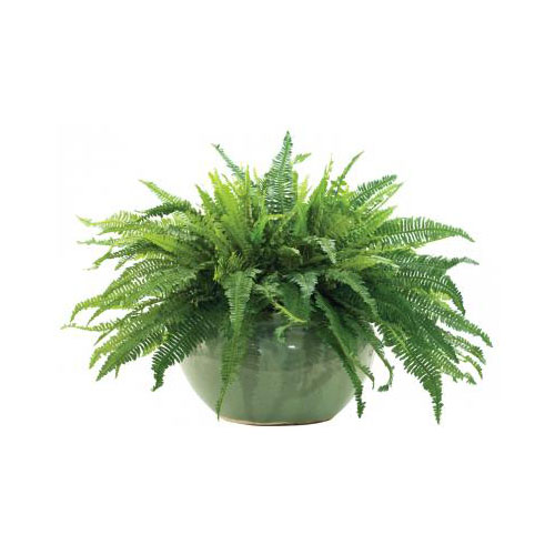 NDI  Fern Boston, Pottery Longshan Green
