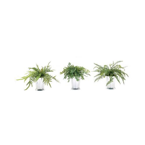 NDI  Ferns | Silver Tumbler | Set of Three
