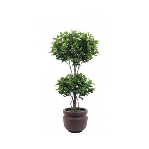 NDI  Laurel Topiary | Shown in Container A, Potters Jar Old Iron