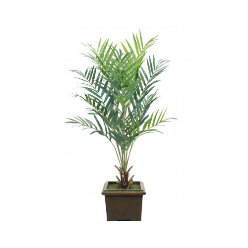 NDI  Kentia Palm |Shown in Container I, Low Square Planter